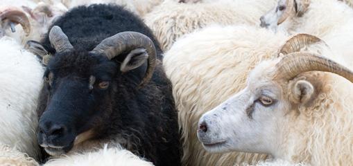Verpackungsentsorgung aktuell - Von Gelben Tonnen und schwarzen Schafen